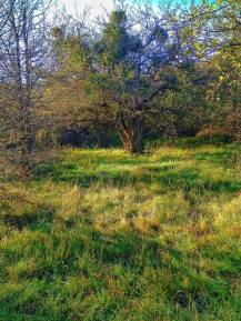 nel bosco 3