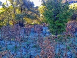 nel bosco 5