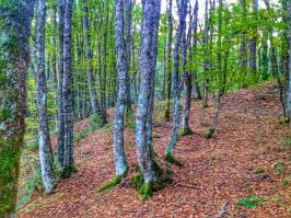 nel bosco 6