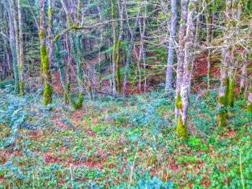 nel bosco 7